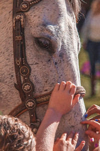 CHILDREN TOUCHING HORSE