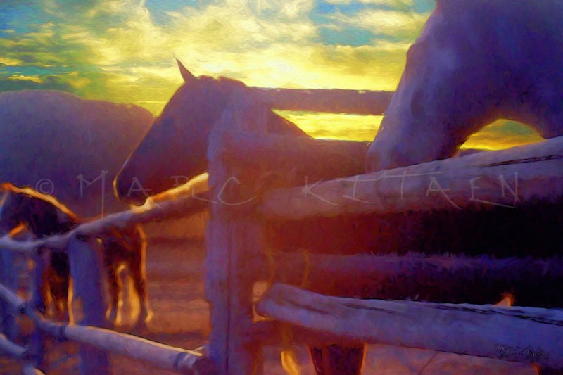 DAWN OF THE HORSES
