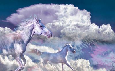 """FREE RANGE"" ARABIAN HORSES"