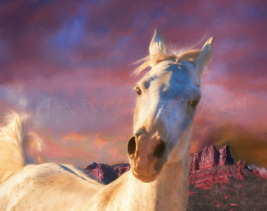 HEART OF MOUNTAIN ARABIAN HORSE PORTRAIT