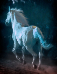 NIGHT DANCER ARABIAN HORSE