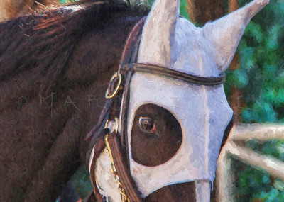 WHITE MASK RACE HORSE