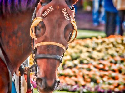 BEAN BARN HORSE RACER