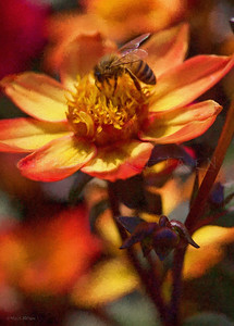HONEY BEE FLOWER FURY