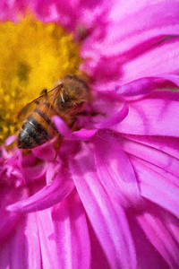 HONEY BEE FLOWER INSPECTOR PURPLE
