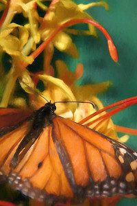LIFE IS BUT A DREAM... MONARCH BUTTERFLY