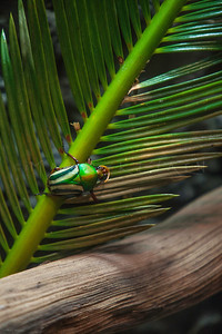 GREEN BEETLE PALM LEAF