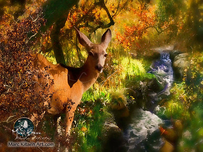 NATURE LIVES WITHIN YOU DEER 1