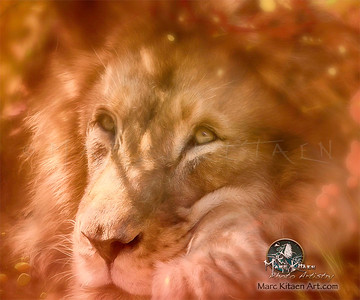Lion in the Eyes / Portrait