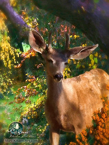 NATURE LIVES WITHIN YOU DEER 2