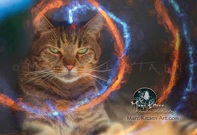 CAT AURA PHOTOGRAPHY