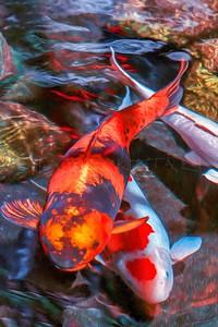COY FISH DUET