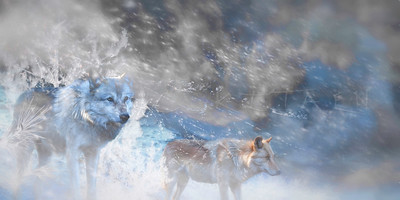 WOLF TERITORIES