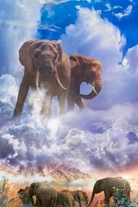 ELEPHANT SPIRITS OF Mount Kilimanjaro