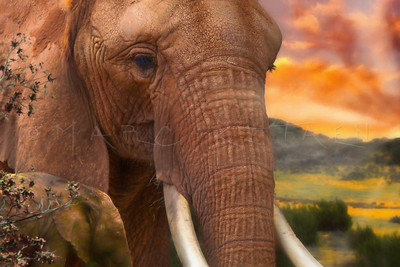 """I FEEL YOUR HEART"" African Elephant Father"