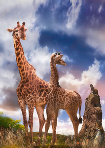 MOMMY WAS I EVER THAT SMALL? GIRAFFE'S