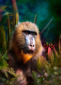 Mandril Baboon MASK IN THE JUNGLE