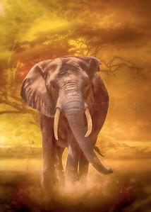 """""""Elephant Nobility"""""""