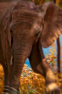 HAPPY FEET African Elephant BABY