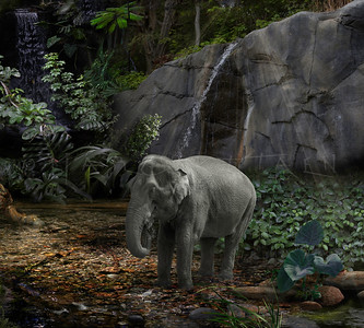 ELEPHANT RAIN FOREST Asian Elephant