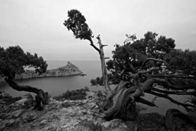 Trees in Karaul-Oba national park