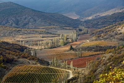 Grape fields in eastern Crimea, October 2013
