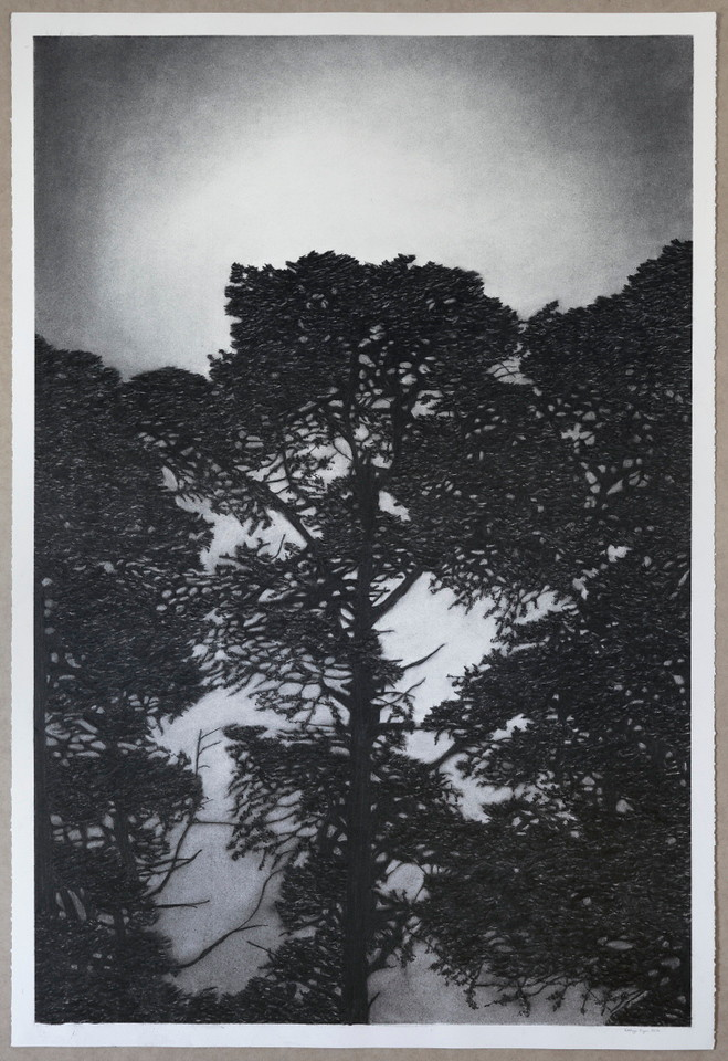 Railway Pines, charcoal on paper 2016 $6,500 framed