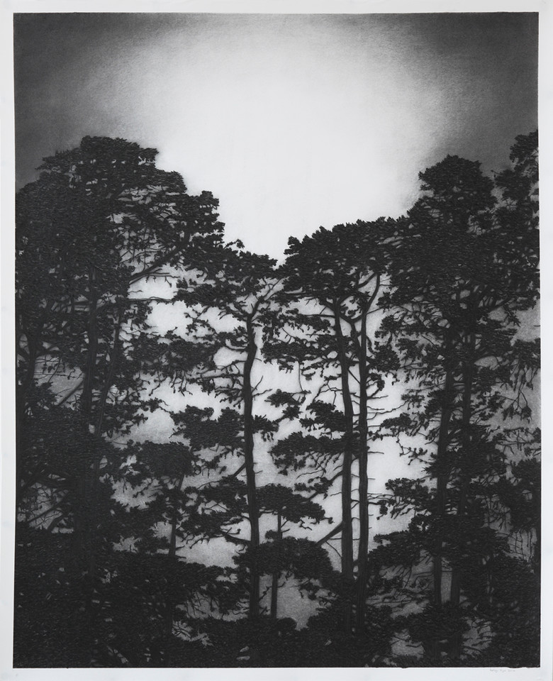 Illuminated Pines, charcoal on paper 130 x 107cm framed $6,800