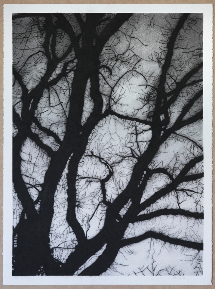 Winter Branches, charcoal on paper 2016 SOLD