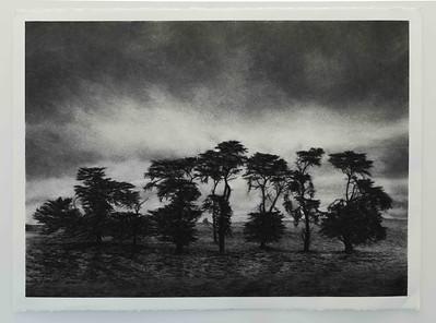 Hopkins Falls Pines 1, Framed SOLD