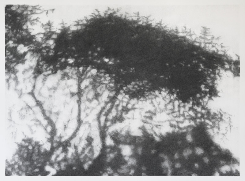 Hopkins River Shadow #2 charcoal on paper 72 x92 cm framed $2,500