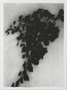 Shadow Leaves #2, charcoal on paper image 72 x52cm Framed 93 x73 cm 2013 P.O.A. (mel)