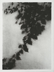 Shadow Leaves #1, charcoal on paper image 72 x52 cm Framed 93 x93 cm 2013 P.O.A.(mel)