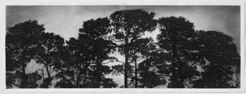 Trainline Pines, charoal on paper framed 72 x170 cm SOLD