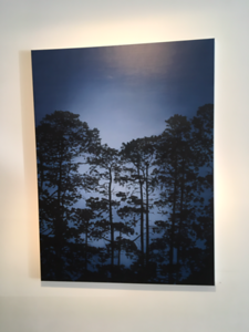 Illuminated Pines, oil on linen 183x137cm 2017 $16,500 AUD