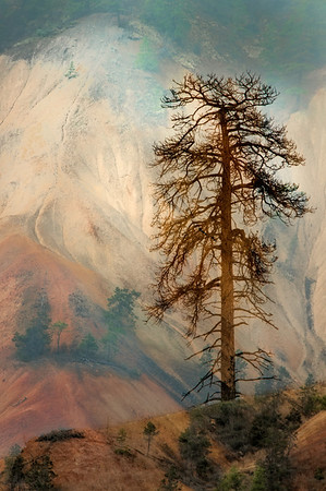 PAINTED HILLS SENTINEL <br /> <br /> Imprinting its presence on the beautiful painted hills north of Cache Creek, British Columbia, the tree, beautifully silhouetted, becomes the stately guardian of this exquisite landscape.