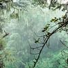 Marangu Route Rain Forest