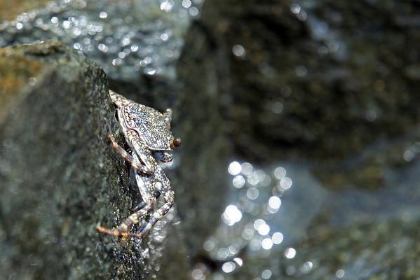Crab on rocks