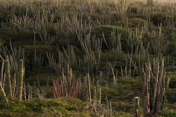 Miralamar, Parke Nacional Arikok