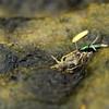 Beetle feeding