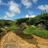 Rooi Prins, Parke Nacional Arikok