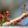 Close-up of delicate red flowers growing on tree