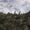Aruba's rocky shore