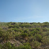 Aruba vegetation
