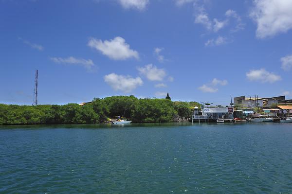 Mangroves at Spanish Lagoon