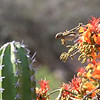 Small bird near cactus