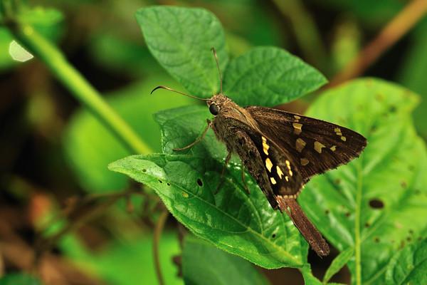 Butterfly at Cero Arikok Hill, Parke Nacional Arikok