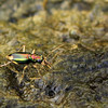 Colorful beetle on rocks