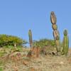 Landscape (Daimari) in Parke Nacional Arikok