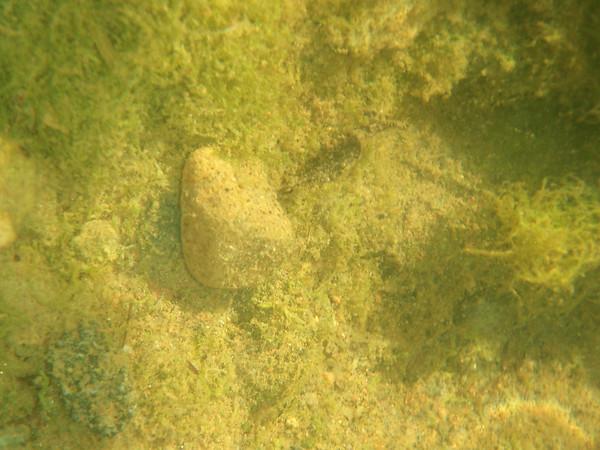 Aruba freshwater hole